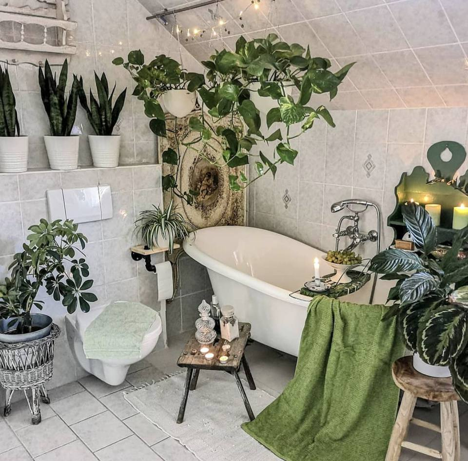 Various house plants in a bathroom.