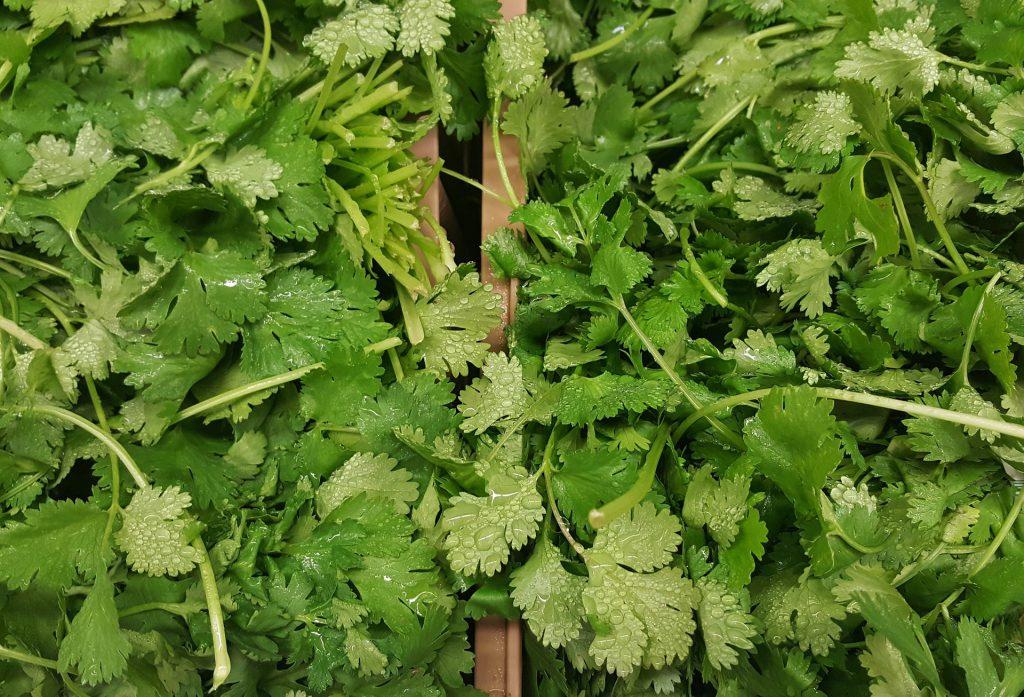cilantro-leaves