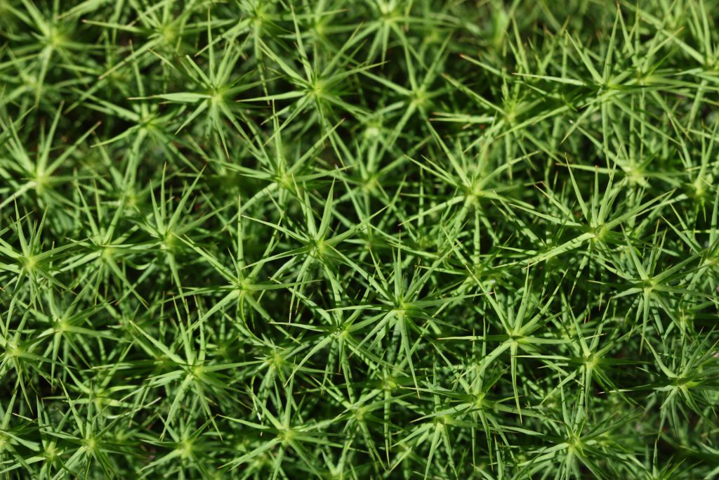 dill-herbs