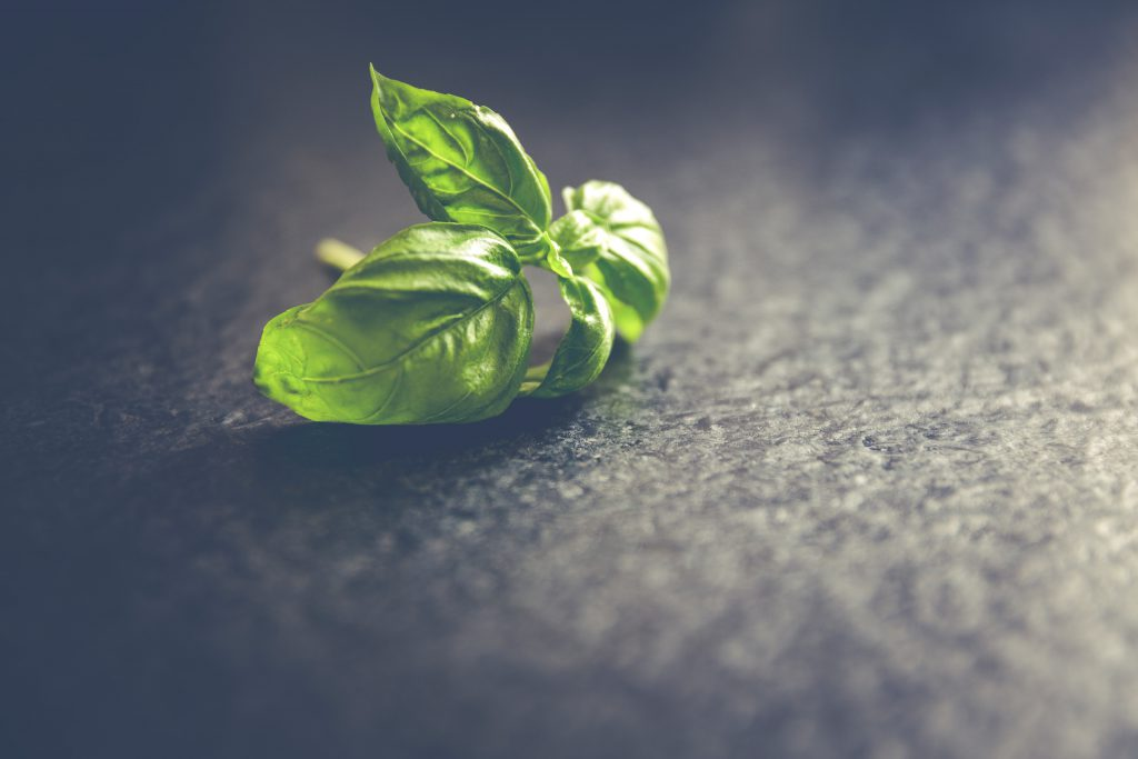 herb-ready-to-grow