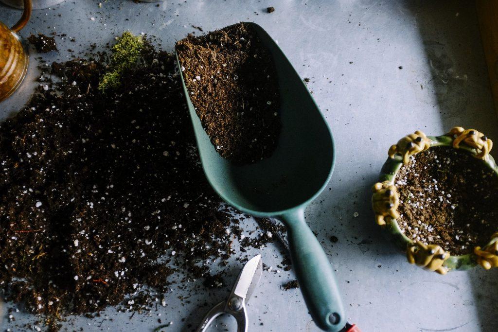 planting-herbs