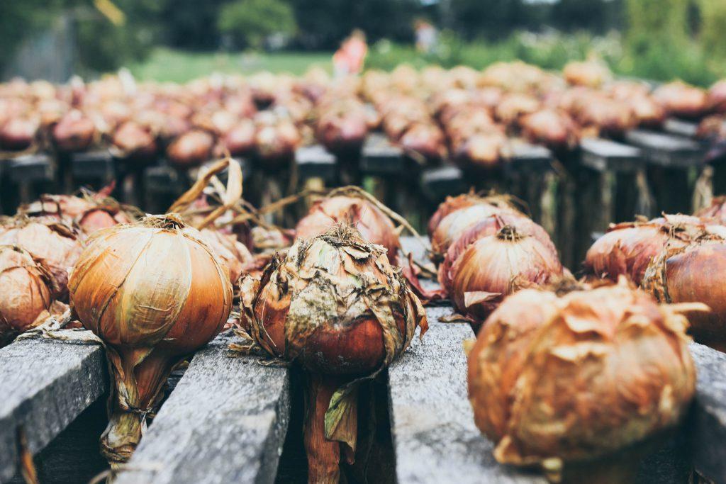 growing-garlic-outside