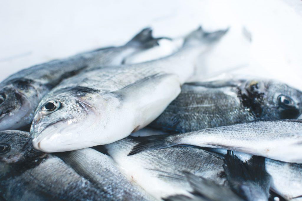 fish-in-ice